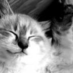 Como insertar imágenes de gatos